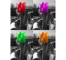 multi-coloured tulips Photographic Print