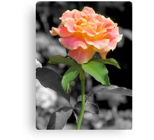 Yellow Tipped Rose Canvas Print