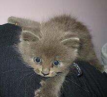 Grey Kitty Attacks by silverdragon