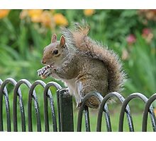 Squirrel on fence Photographic Print