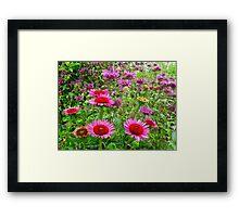 Bee Balm days Framed Print