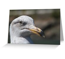 Unhappy Seagull Greeting Card