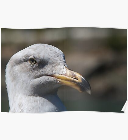 Unhappy Seagull Poster