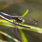 Blue Eyed Flights by Shaun Colin Bell