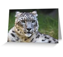 Snow leopard looking right Greeting Card
