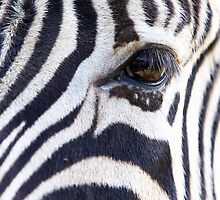 Zebra Eye soft face by bobkeenan