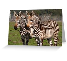 Pair of Zebras Greeting Card