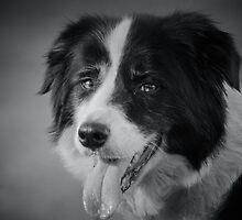 Desiree the Wonder Dog by AngelaHumphries