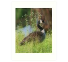 Wild Canada Goose In Tall Grass Art Print