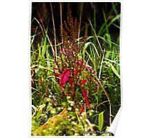 Merri Creek Plants Poster