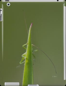 Grasshopper by monsieurI
