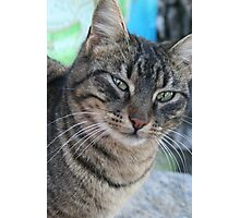 Inquisitive Tabby Cat With Green Eyes Photographic Print