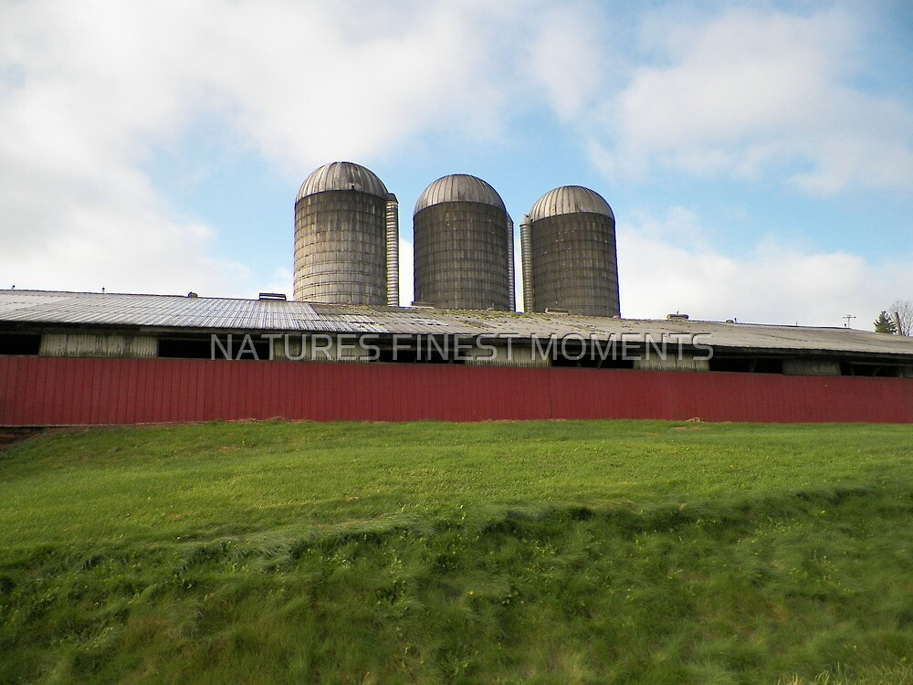 Dairy Farm by NATURES FINEST MOMENTS