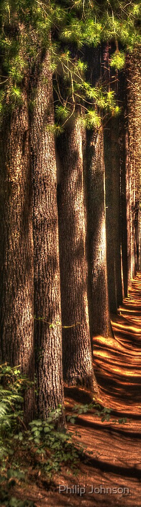 Cathedral  # 3- Sugar Pine Walk, Laurel Hill NSW - The HDR Experience by Philip Johnson