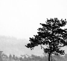 16.1.2013: Lonely Pine Tree by Petri Volanen