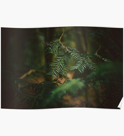 Natural Framing Poster
