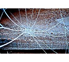 Spider's web - frozen Photographic Print