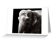 The lonely Elephant Greeting Card