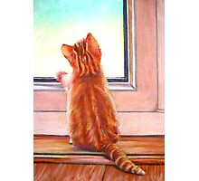 Cat at the Window Photographic Print
