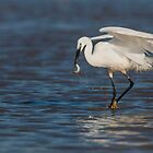 Little Egret catching a fish by LaurentS