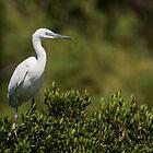 Little Egret sitting on a bush by LaurentS