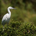 Little Egret sitting on a bush by LaurentS