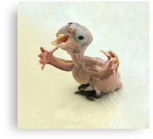 Baby bird with arms Canvas Print