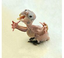 Baby bird with arms Photographic Print