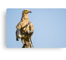 Egyptian Vulture Boromir Canvas Print