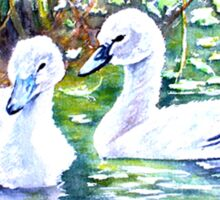 Two Cygnets Sticker