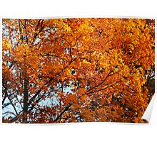 Autumn Leaves At Their Peak Poster