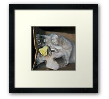 The Paper Chase.... Framed Print