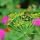 From the Herb Garden by Scott Mitchell