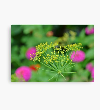 From the Herb Garden Canvas Print