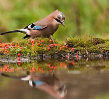 Jay looks at itself in the mirror by LaurentS
