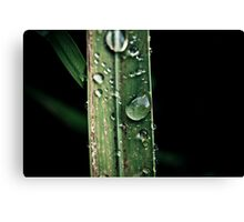 Leaf Tears Canvas Print
