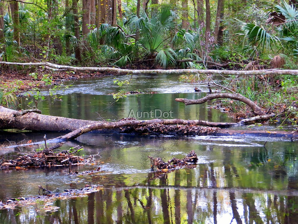 WaterLogged by AuntDot