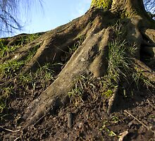 Roots by James Taylor