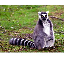 Surprised Ring Tailed Lemur Photographic Print