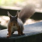Nutty Red Squirrel by Coemlyn