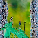 Osprey's pirch by TIMOTHY  POLICH