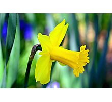 Daffodil With Natural Bokeh Photographic Print