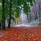Seasonal Confusion by Gene Walls