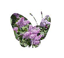 Butterfree used Silver Wind Photographic Print
