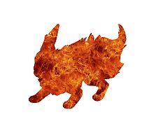 Flareon used Flamethrower Photographic Print