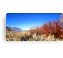 Winter Desert Colors Canvas Print