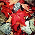 Red Maple Leaves on the Rocks by Susan Drysdale