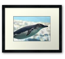 GLIDING PENGUIN IN WATER Framed Print