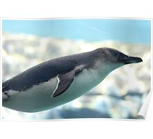 GLIDING PENGUIN IN WATER Poster