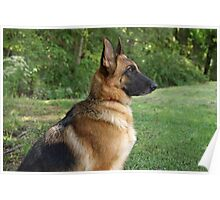 German Shepherd Profile Poster